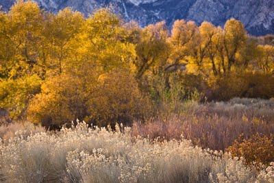 Lubken Canyon - Lone Pine