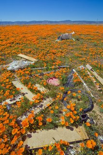 Poppies & Trash - Antelope Valley